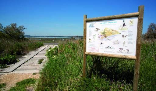 Site protégé de La petite Camargue  au printemps / Protected site of La petite Camargue in springtime