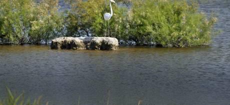 Une journée mondiale pour les zones humides