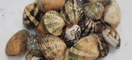 Le GIPREB demande le maintien de la fermeture de la pêche des palourdes