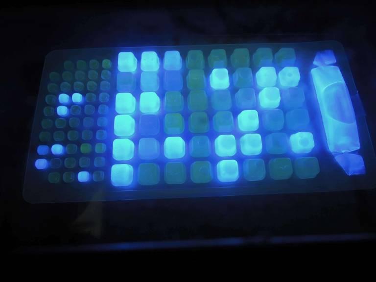 Manip Bacterio Plaquette Sous Lumiere UV 1