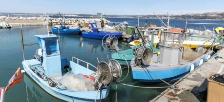 Le renouveau de la pêche professionnelle