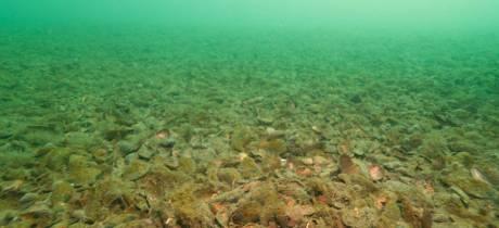 Adieu oursins, nacres et biodiversité marine dans l'étang ?