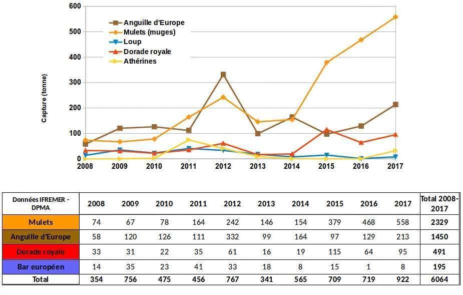 Evolution des captures par la pêche professionnelle sur l'étang de Berre (données statistiques DPMA-IFREMER)