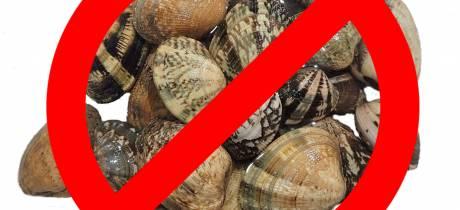 La pêche des palourdes est interdite jusqu'au  15 octobre