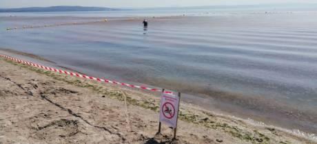 Une bonne qualité sanitaire des eaux de l'étang mais d'étranges échouages d'algues décomposées